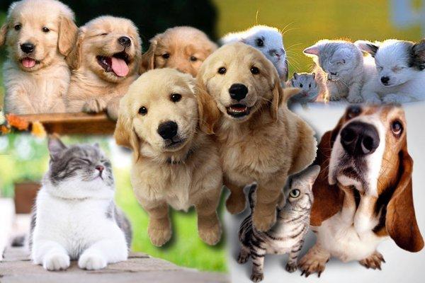 important component of pet insurance plans